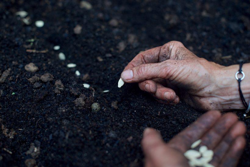 Marta planta unas semillas de calabaza en nuestro pequeño huerto